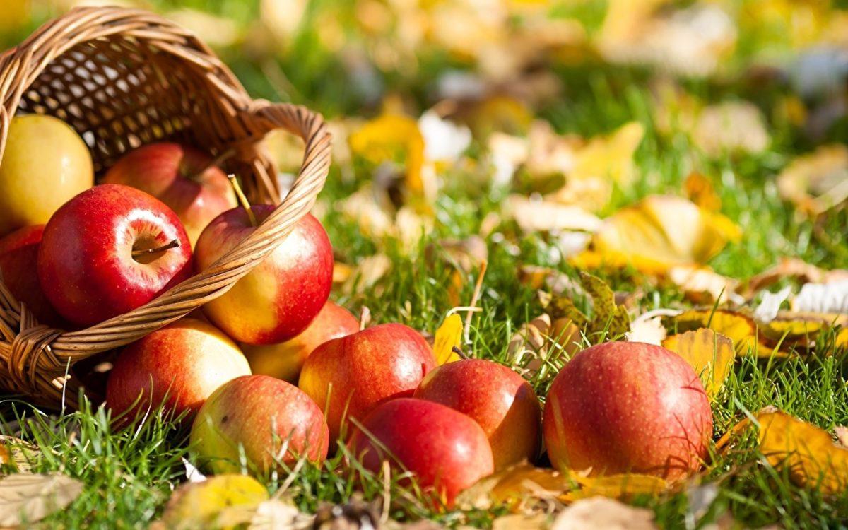 Am 11. Januar ist der offizielle Tag des deutschen Apfels!